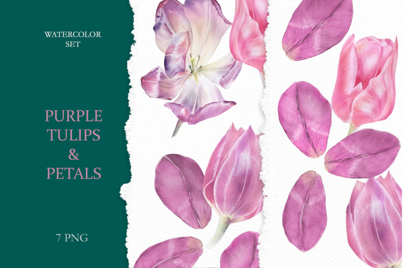 pink-and-purple-watercolor-tulips