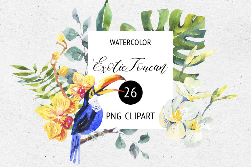 watercolor-summer-png-toucan-clipart