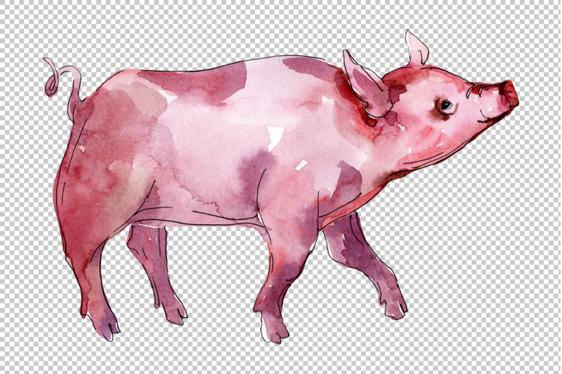 farm-animals-pig-boar-watercolor-png