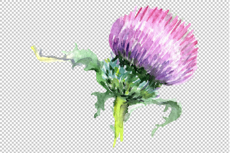 Thistle Watercolor Png By Mystocks Thehungryjpeg Com