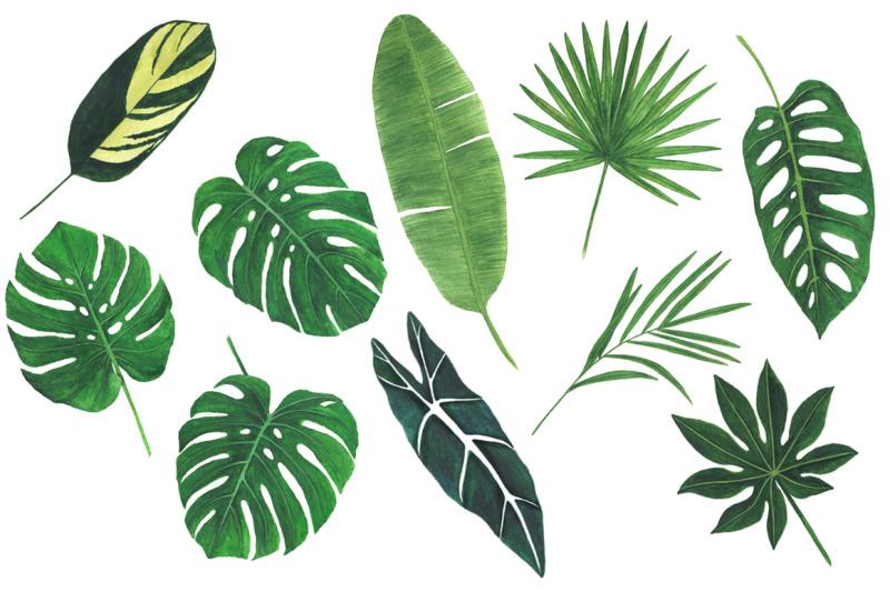 watercolor-tropical