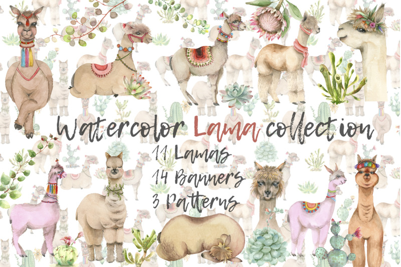 lama-in-cactus-collection