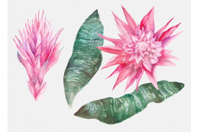 aechmea-watercolor-tropical-flowers-set