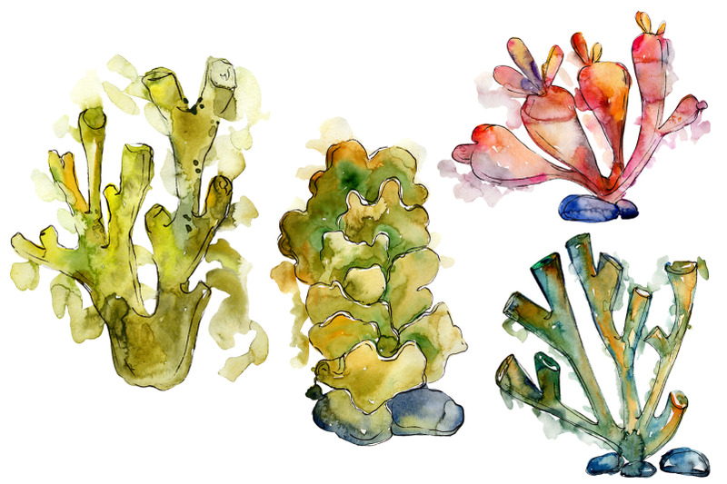 corals-seafood-watercolor-png