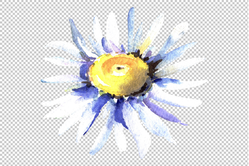daisy-chamomile-watercolor-png