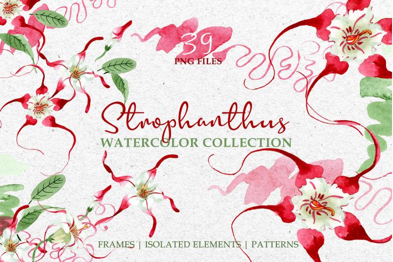 strophanthus-watercolor-png