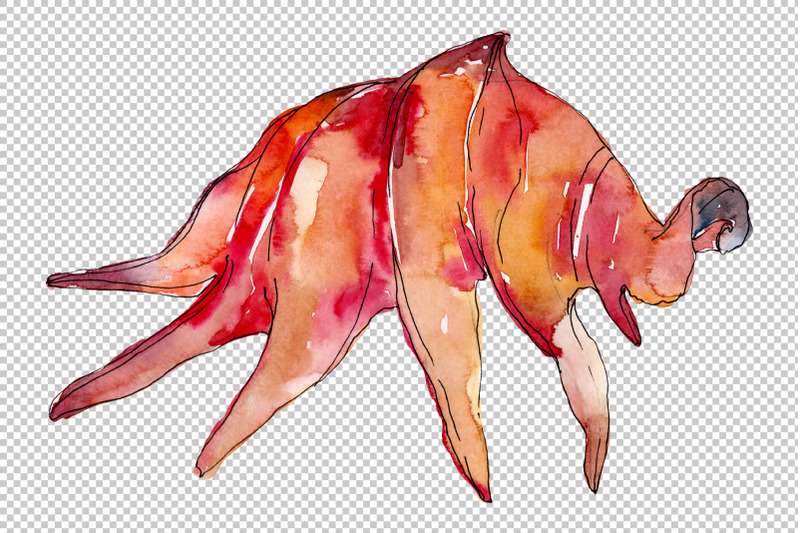shells-watercolor-png