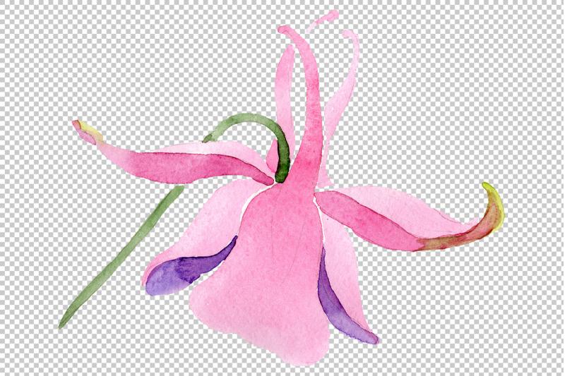 red-aquilegia-watercolor-png
