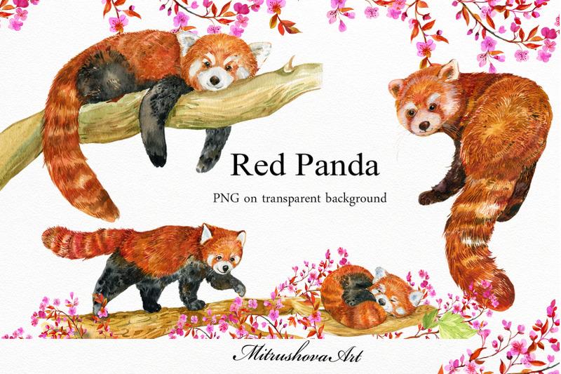red-panda-watercolor-illustrations