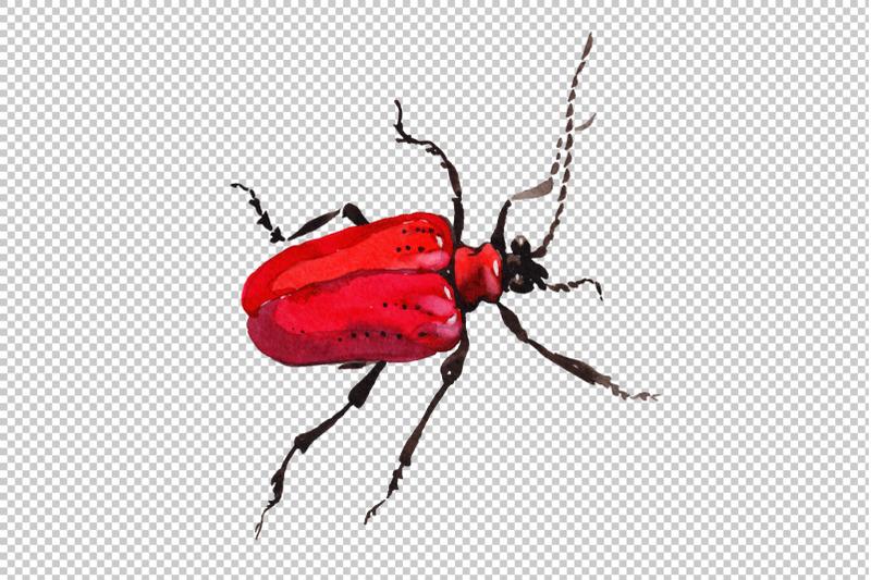may-beetle-ordinary-watercolor-png