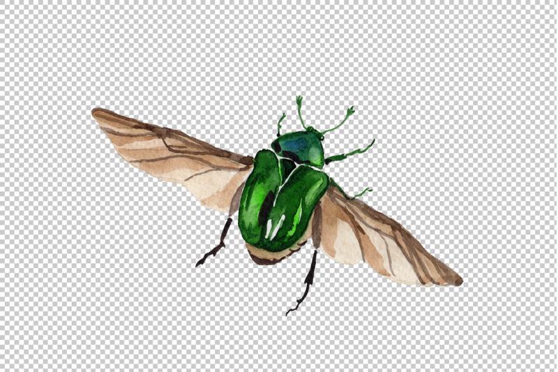 may-beetle-aurata-watercolor-png