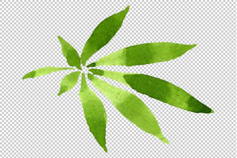leaves-hemp-plant-watercolor-png