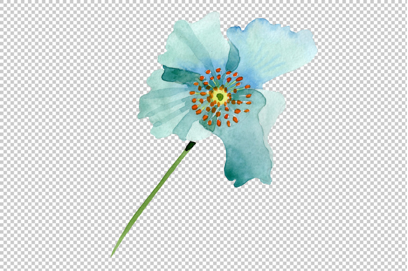 turquoise-poppy-watercolor-png