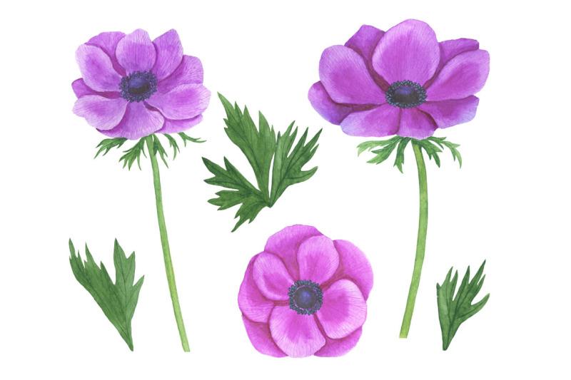 anemones-watercolor-anemones-pattern-anemones-frames