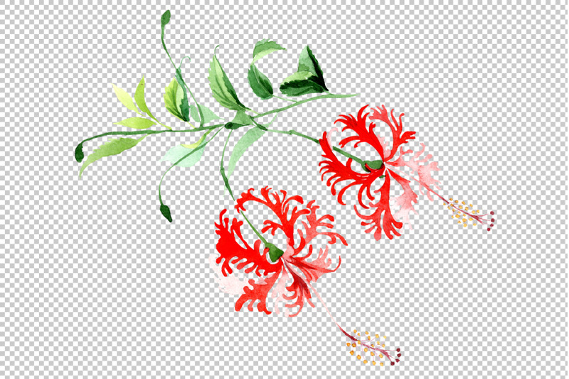 hibiscus-schizopetalon-red-watercolor-png