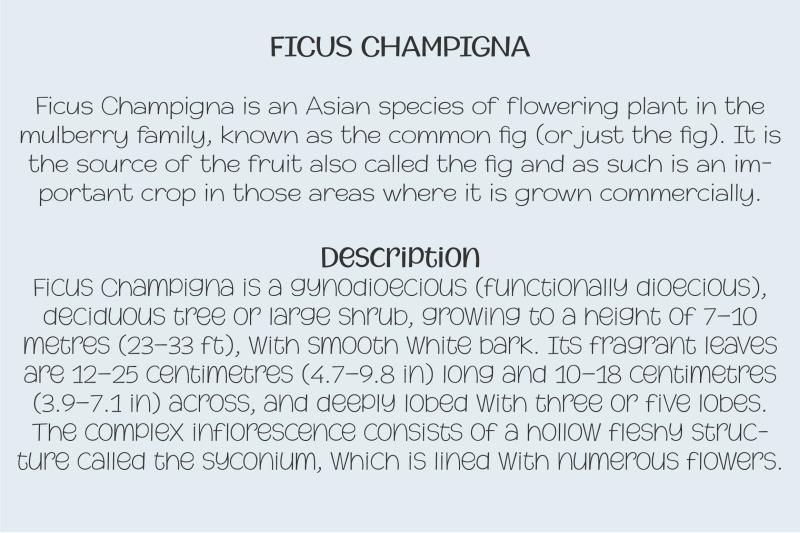 champigna-comic-family