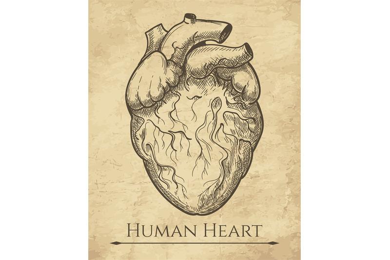 human-heart-retro-sketch