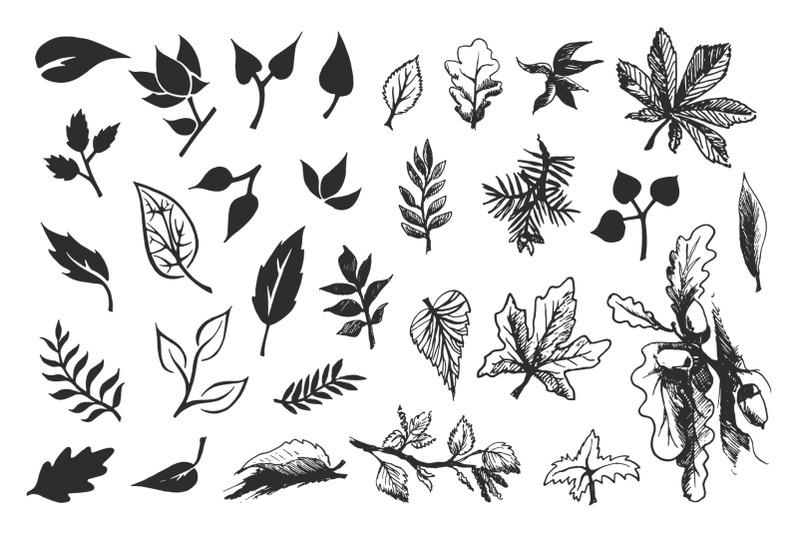 foliage-hand-drawn-leaves-nbsp