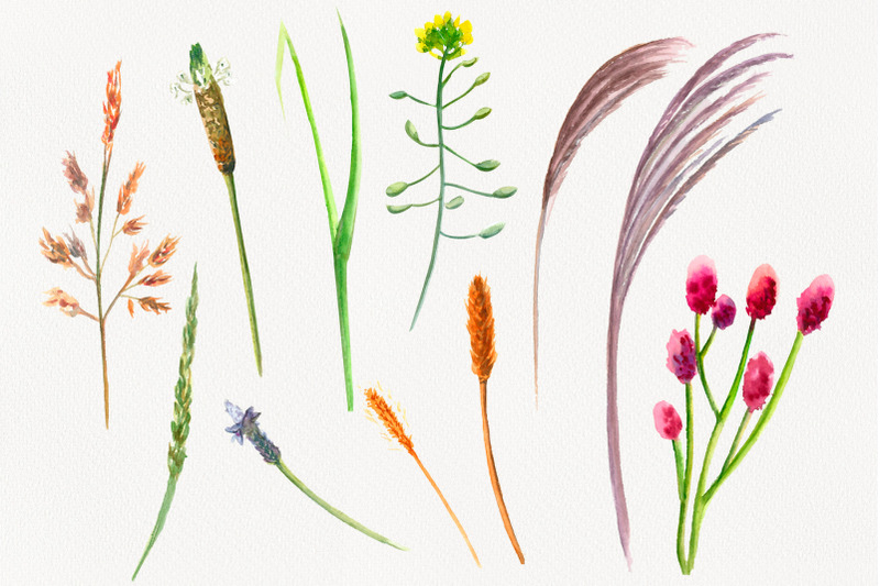wildflowers-and-herbs