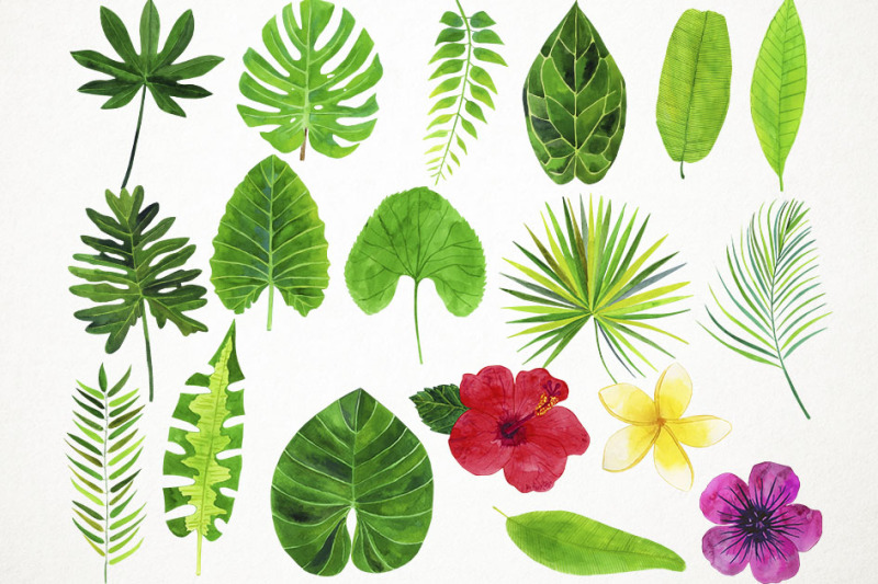 watercolor-tropical-leaves-clipart-tropical-leaves-illustration
