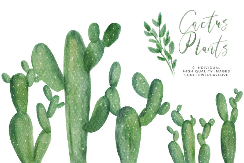 watercolor-cactus-plant-clipart-set-green-natural-botanical-clip-art