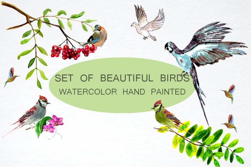set-of-beautiful-birds
