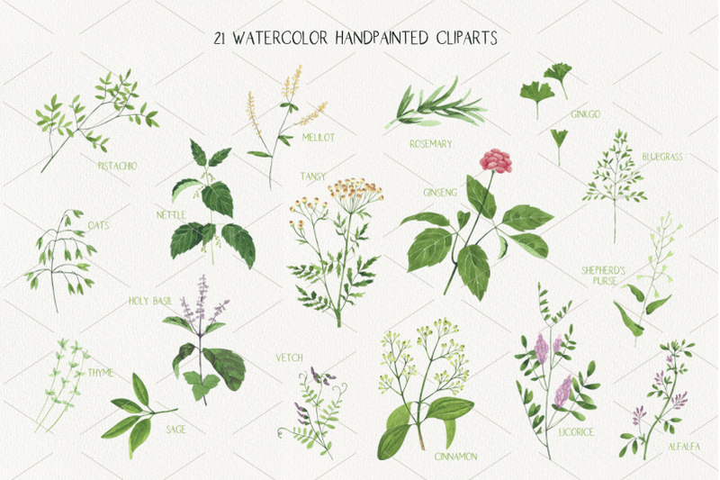 culinary-amp-medicinal-herbs-watercolor-illustrations-set