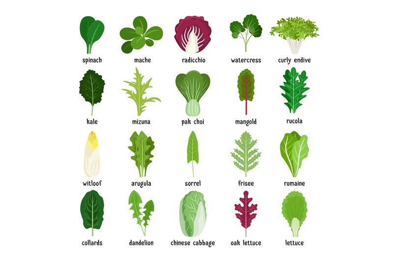 green-salad-leaves-set