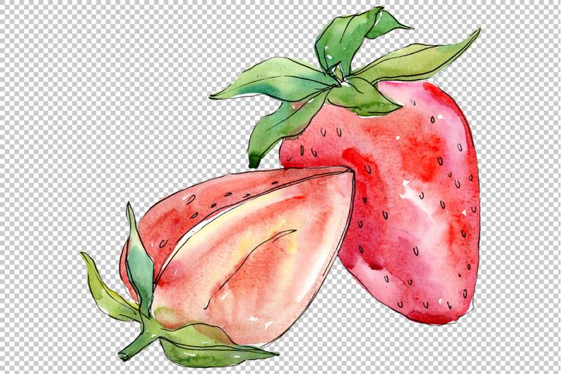strawberry-quot-alba-quot-watercolor-png