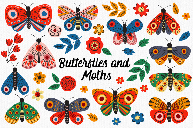 butterflies-and-moths-collection