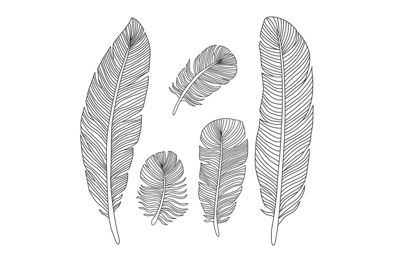 hand-drawn-feathers-outline-silhouettes