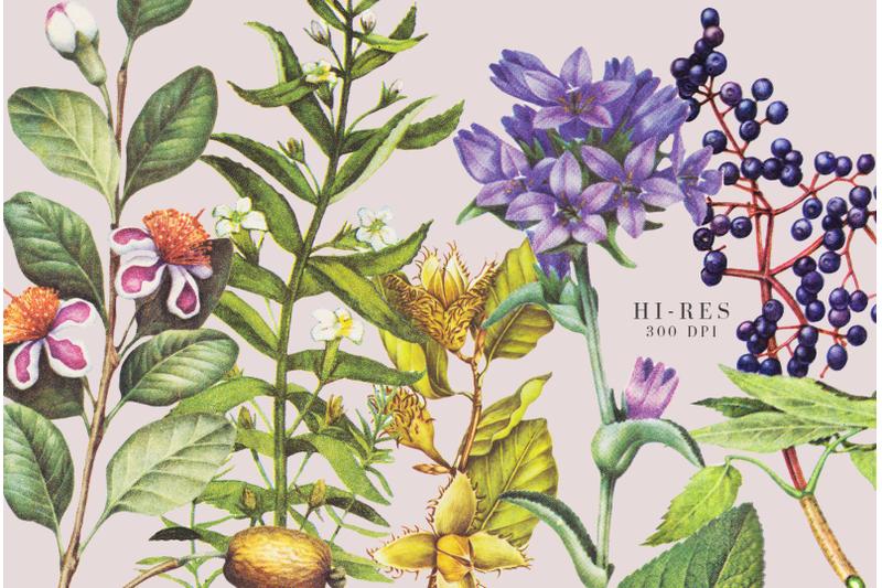 10-retro-botanical-flowers-illustration-in-retro-style
