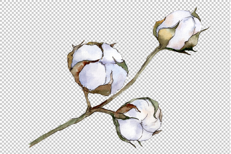 cotton-vegetable-watercolor-png