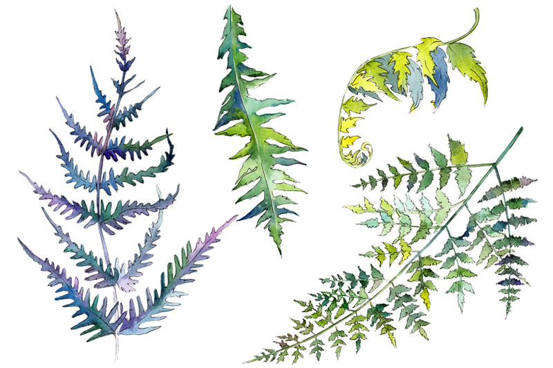 fern-plant-watercolor-png