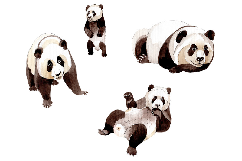 animal-panda-watercolor-png