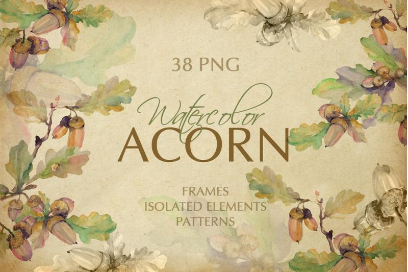 acorn-watercolor-png