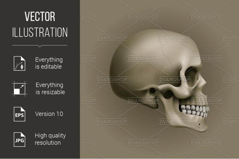 human-skull