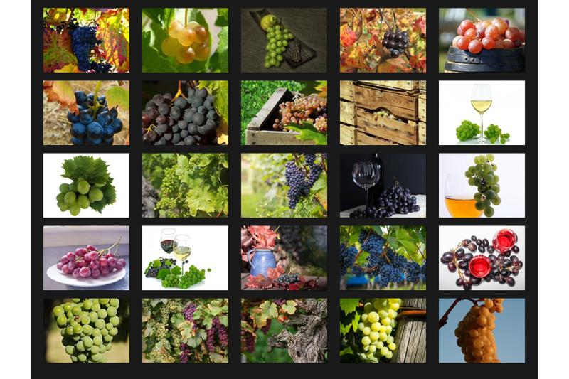 200-high-quality-grapes-nature-fruit-digital-photoshop-overlays
