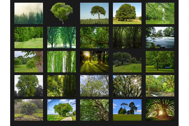 200-high-quality-green-trees-forest-digital-photoshop-overlays