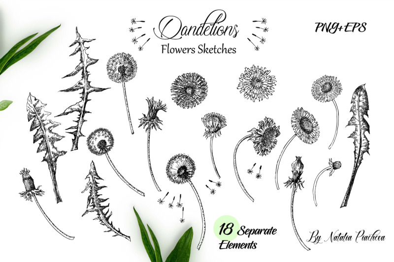 dandelions-sketches-clipart