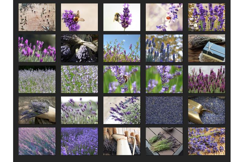 200-high-quality-lavender-digital-photoshop-overlays