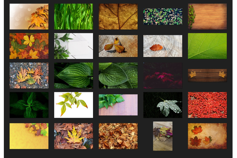 200-high-quality-leaves-forest-tree-digital-photoshop-overlays