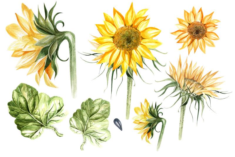 watercolor-sunflower-amp-pumpkins