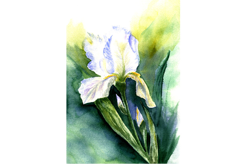sketch-iris