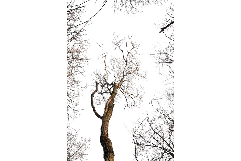 an-image-of-a-tree-surrounded-by-branches-isolated-on-a-transparent-b