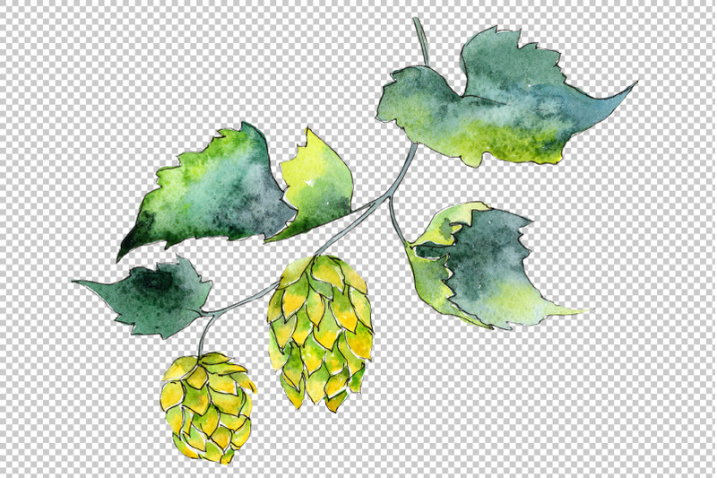 hops-watercolor-png