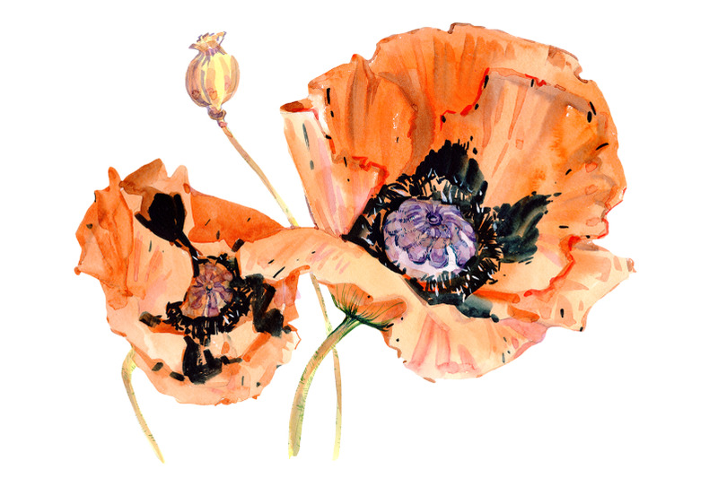 original-poppy-red-watercolor-png