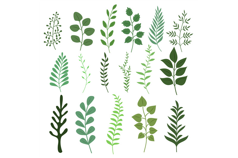 plant-branch-with-green-garden-leaves-vector-set