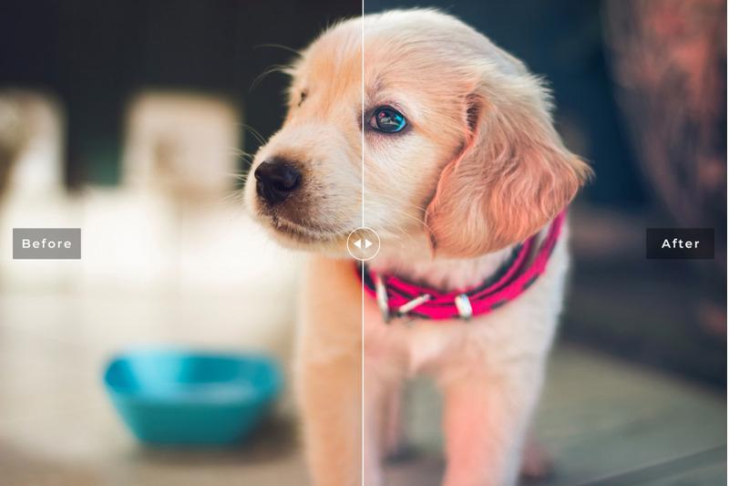 my-dog-mobile-and-desktop-lightroom-presets