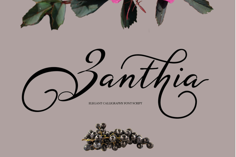 zanthia-script